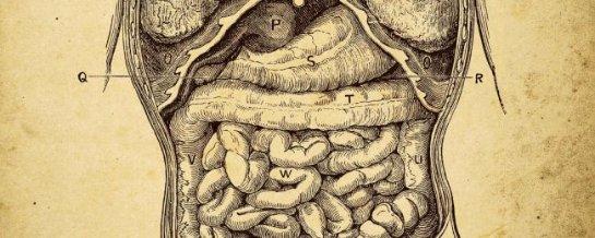 Микробы вашего тела, без которых вы не можете жить