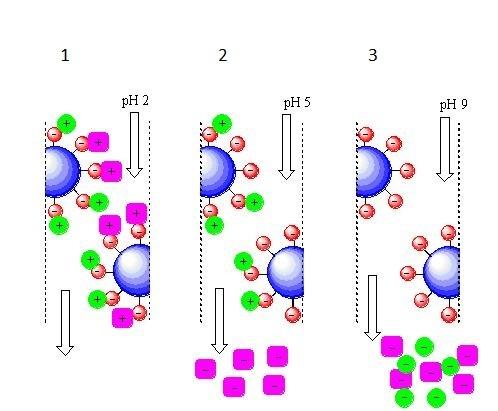Генная инженерия бактерий: как достать из бактерий нужный нам белок - 7