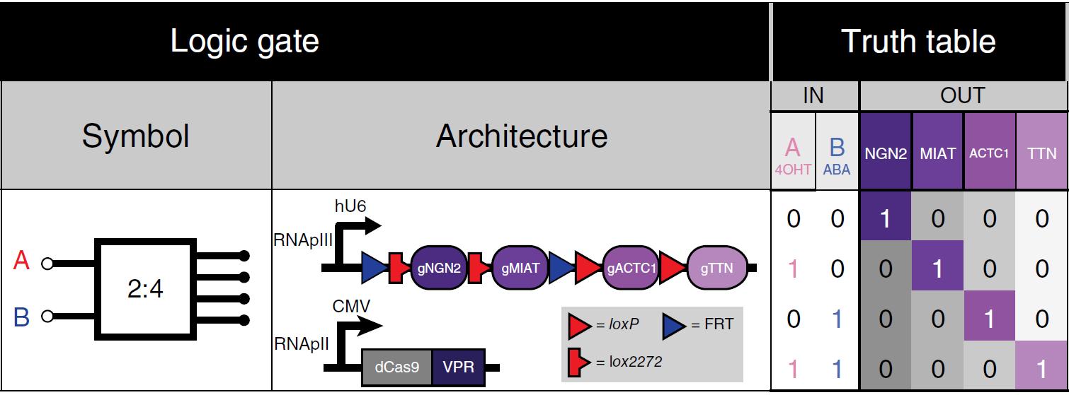Создан фреймворк BLADE для прокладки вычислительных цепей в ДНК млекопитающих и человека - 1