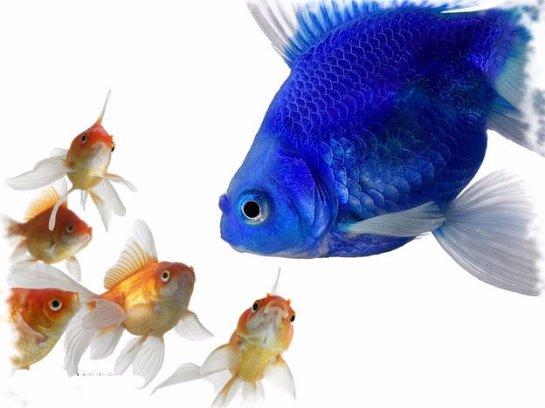 Рыбы способны на дружбу