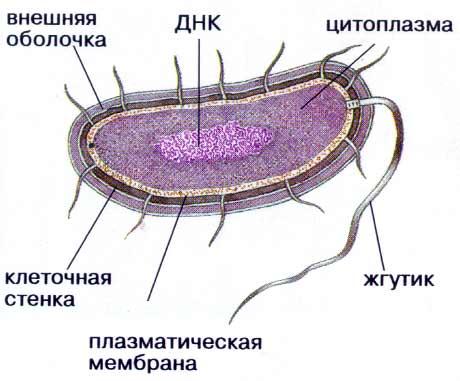 Что такое антибиотики - 3