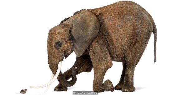 Секреты, которые позволяют животным жить столетиями