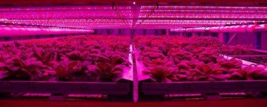 Вертикальные фермы: в будущем каждый сможет выращивать пищу дома