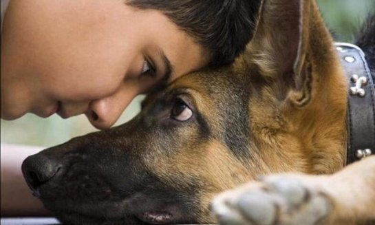 Стало известно, какое животное может читать мысли человека