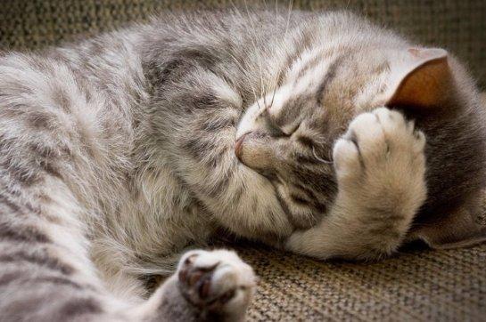 Животные также видят сны