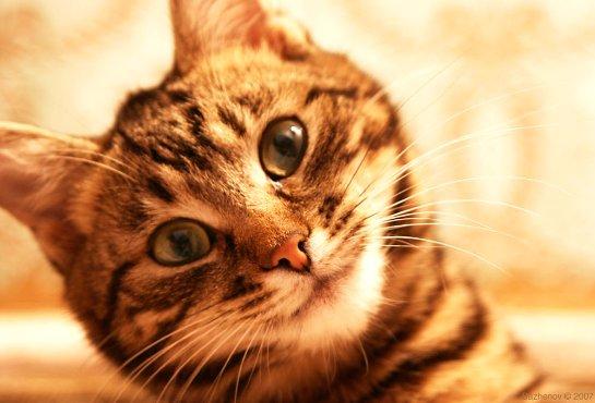 Ученые разгадали кошачью систему знаков