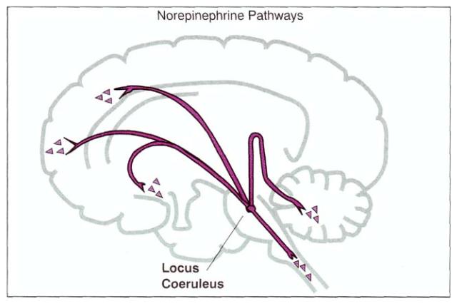 Как лечат сумасшедших. 1.2 — Фармакотерапия: депрессия и антидепрессанты - 5