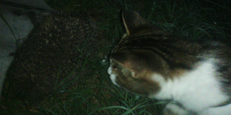 Кот и ёжик