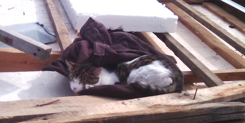 Кот помогает на стройке