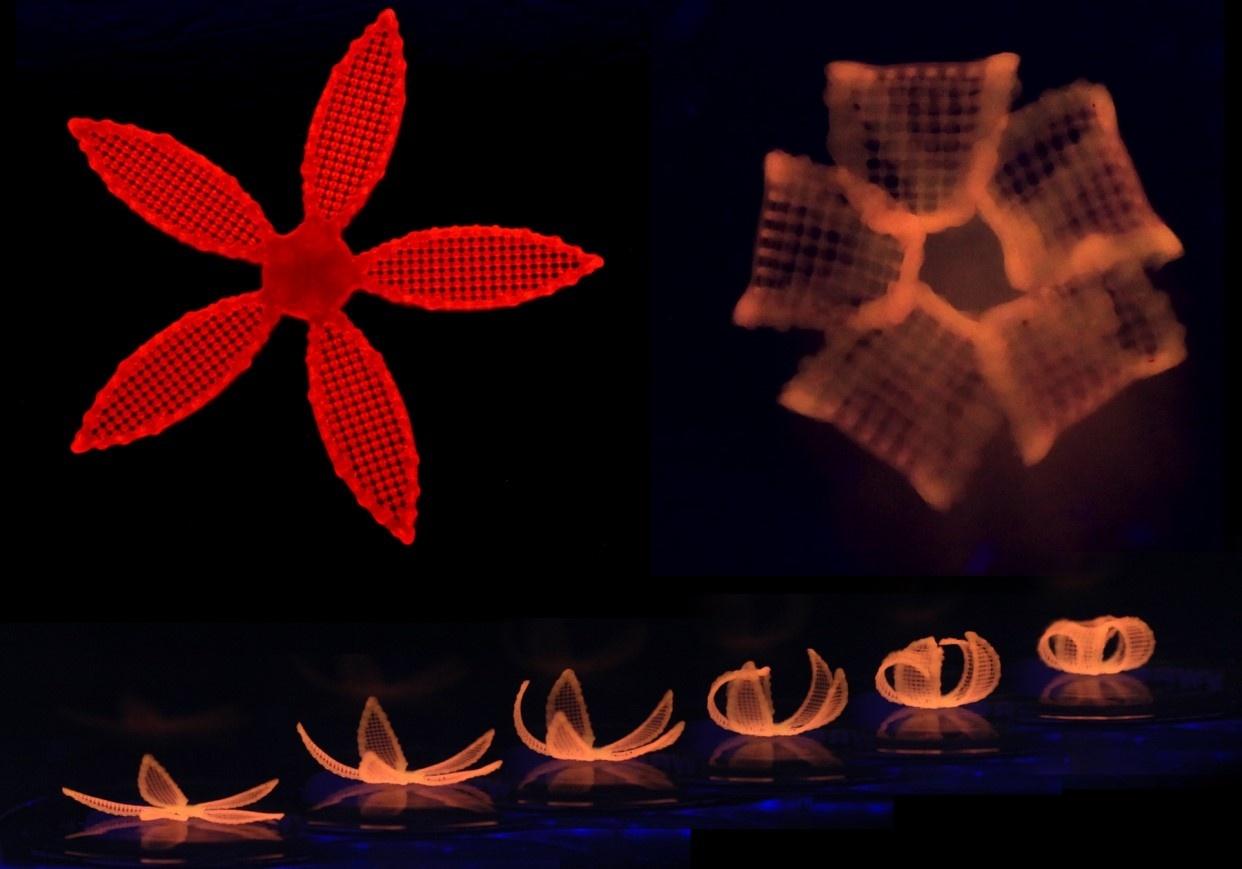4D-печать: новые материалы, меняющие характеристики и форму - 3