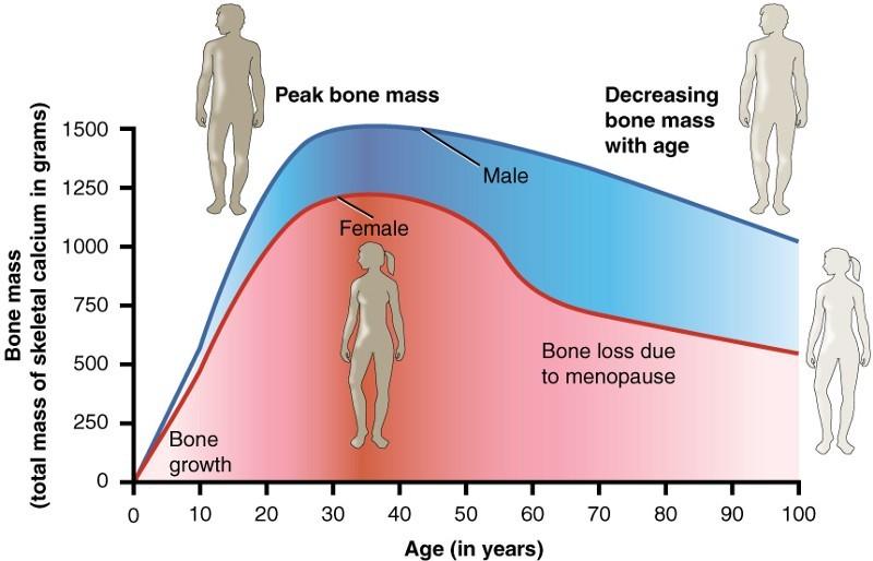 Старение и менопауза — две программы популяционного контроля - 2