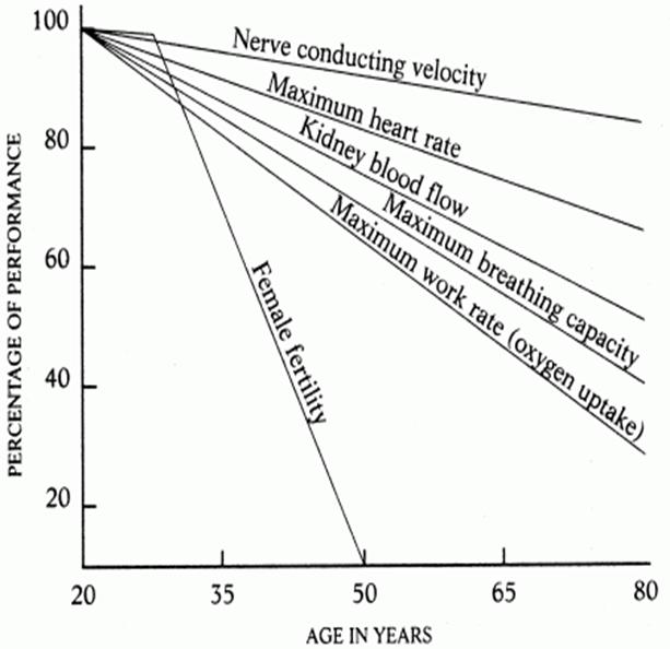 Старение и менопауза — две программы популяционного контроля - 1