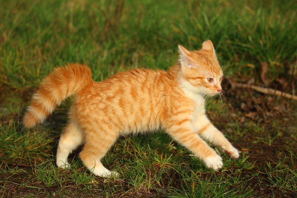 Новое исследование показало, что кошек приручили не так, как других животных - 1