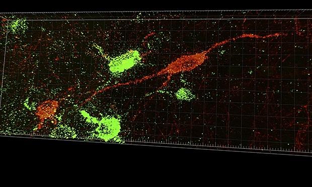 Разработчики ИИ вдохновляются мозгом крыс - 8