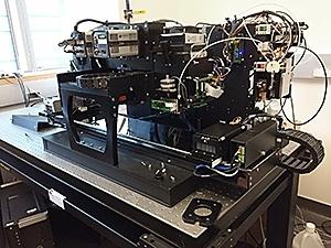 Разработчики ИИ вдохновляются мозгом крыс - 9