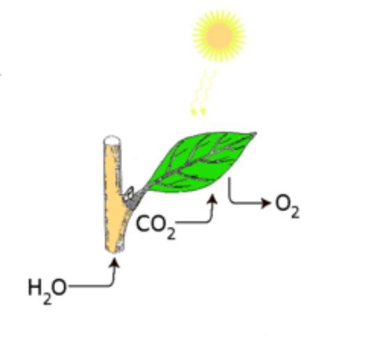 Фотосинтез создаст чистую энергию