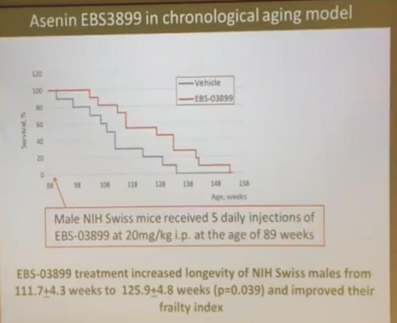 Сенесцентные клетки-зомби — ложный след в борьбе со старением? - 20