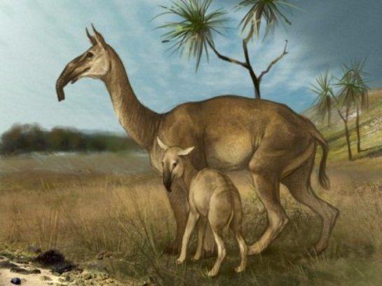 Ученые восстановили ДНК животного ледникового периода