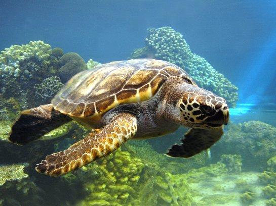 Ученые вырастили искусственным путем кожу настоящей черепахи