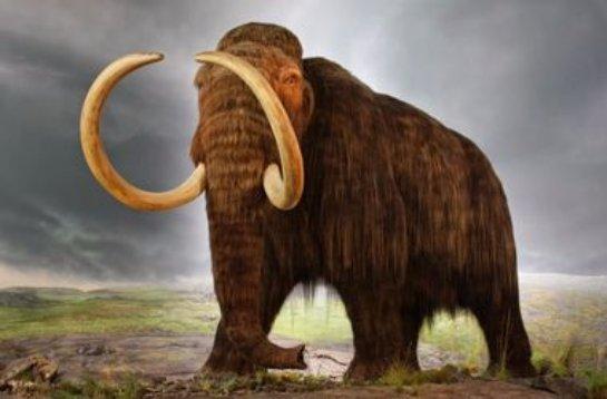 Ученые попытаются воскресить мамонтов