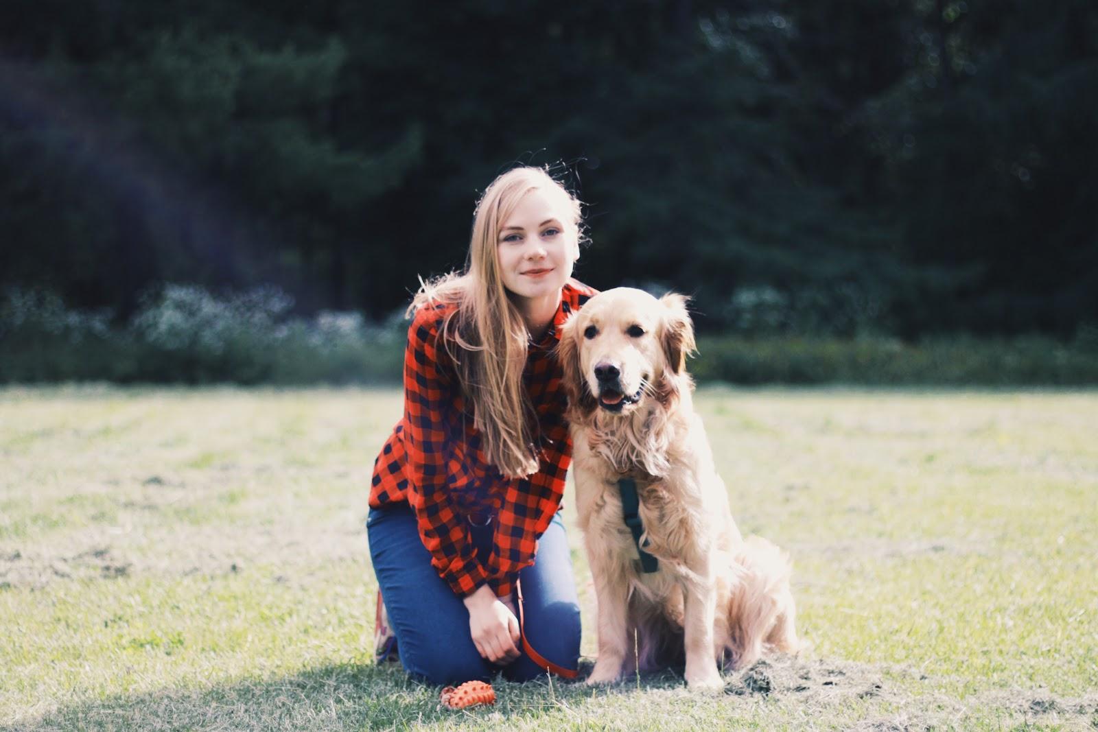 Как работает сервис по выгулу собак «Собака-гуляка» - 1