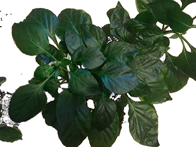 Цветовая сегментация для чайников - 3