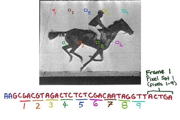 В Гарварде записали анимацию в ДНК живого организма - 1