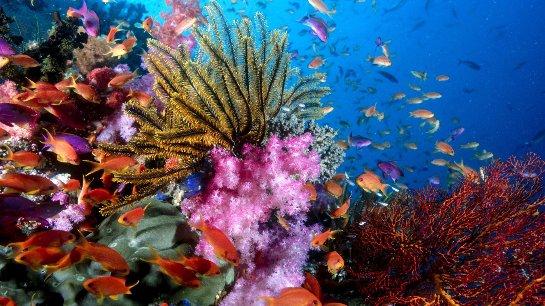 В Тихом океане появились новые коралловые рифы