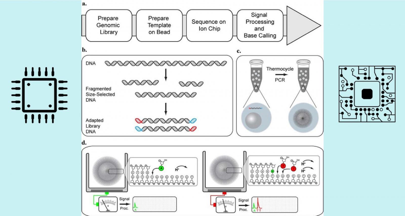 Секвенирование ДНК в домашних условиях: Как на коленке собрать прибор за 10 миллионов - 2