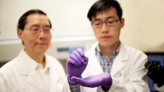 Ученые: клетки кожи могут стать «стройматериалом» для любого органа