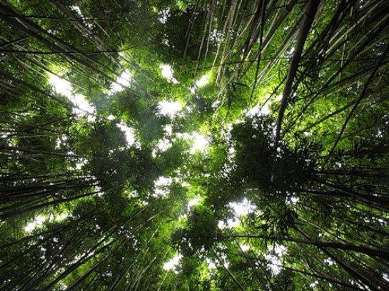 Деревья усугубляют парниковый эффект