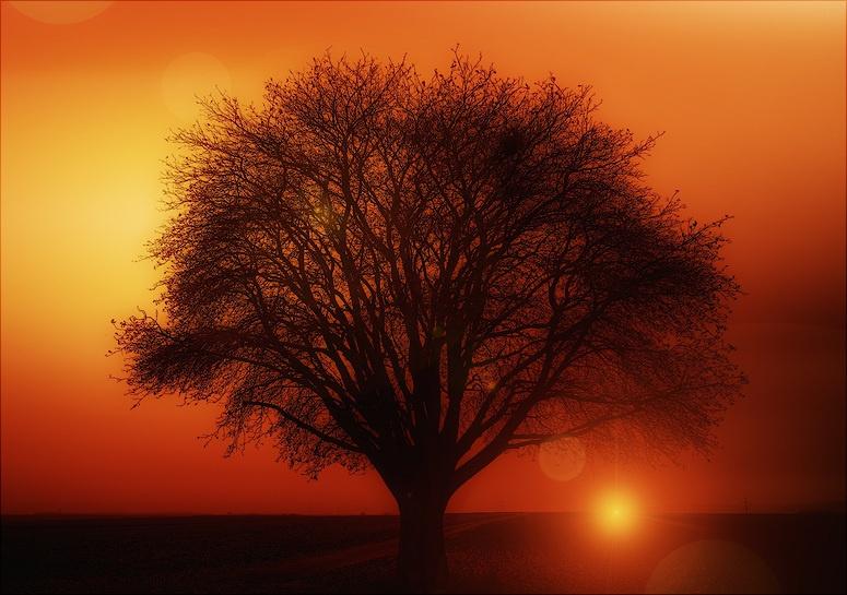 Низкие ветвистые деревья