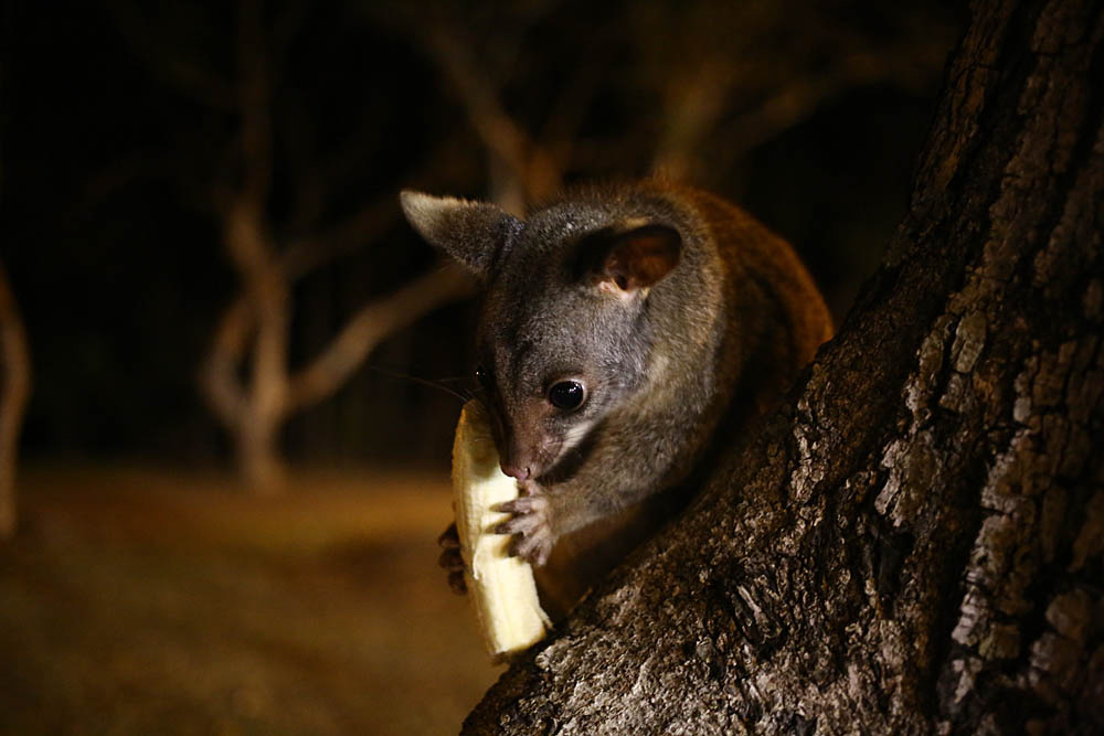 Австралия: небольшая реколонизация Земли - 15