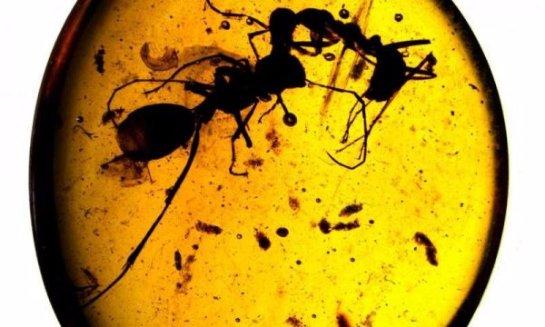 Ученые нашли древнего муравья, у которого были рога из металла