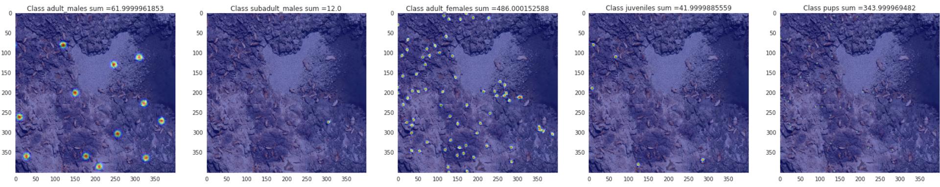 Kaggle: как наши сеточки считали морских львов на Алеутских островах - 14