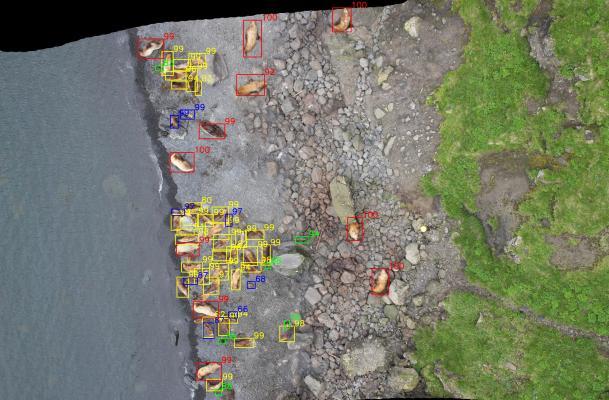 Kaggle: как наши сеточки считали морских львов на Алеутских островах - 20