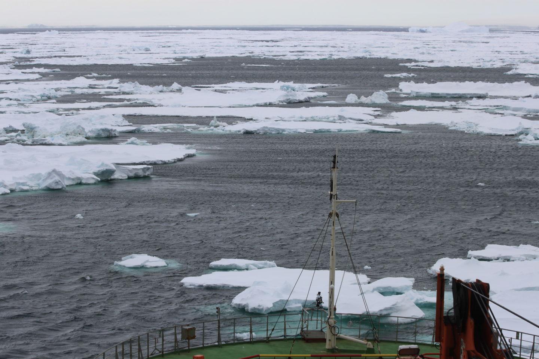 Истории из жизни IT-специалиста на судне, прошедшем вокруг Антарктики - 4