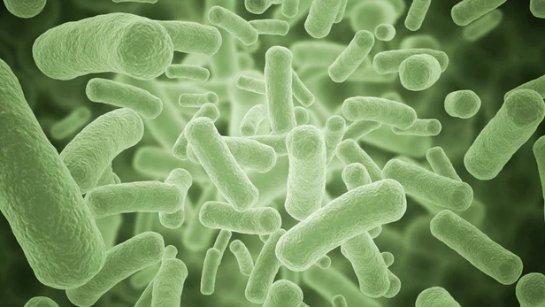 Ученые научились выявлять антибиотикорезистентные бактерии за 30 минут