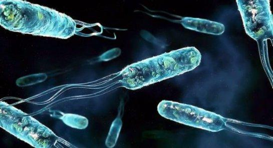 В Якутии нашли микроорганизмы, возраст которых достигает 3 миллионов лет