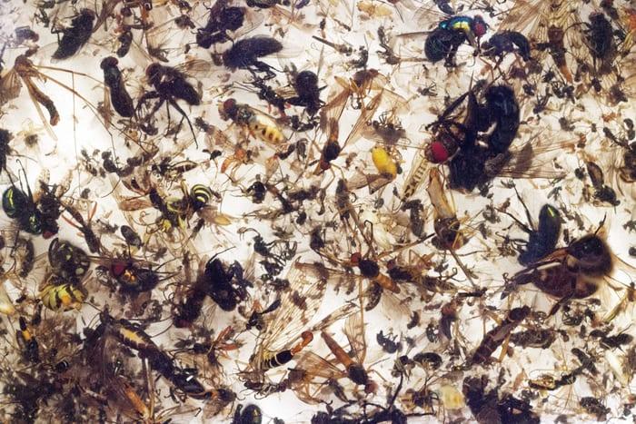 За последние 27 лет биомасса летающих насекомых в Германии снизилась на 76% - 2