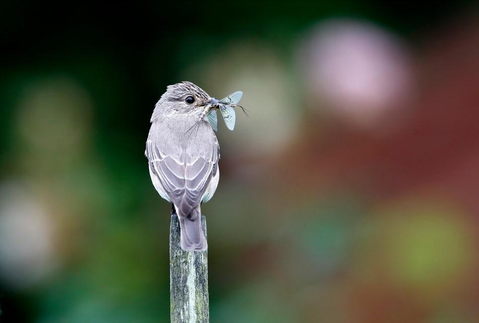 За последние 27 лет биомасса летающих насекомых в Германии снизилась на 76% - 1