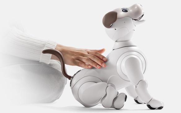 Sony возобновляет производство роботов-собак AIBO - 2