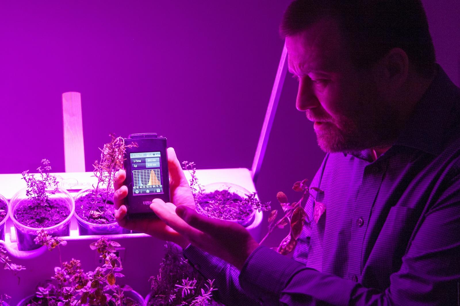 Освещение растений белыми светодиодами - 13