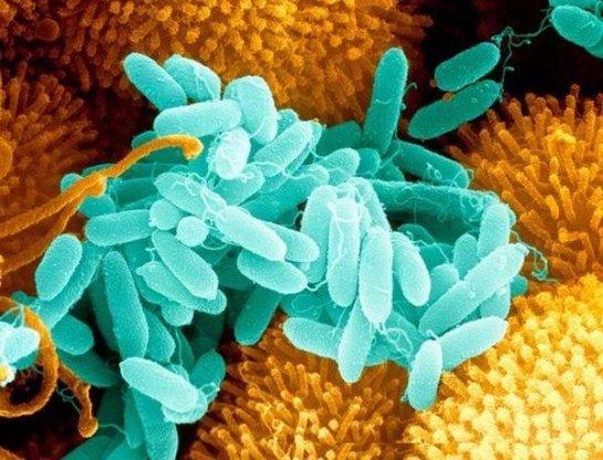 Супербактерии погубят человечество раньше, чем последствия изменения климата