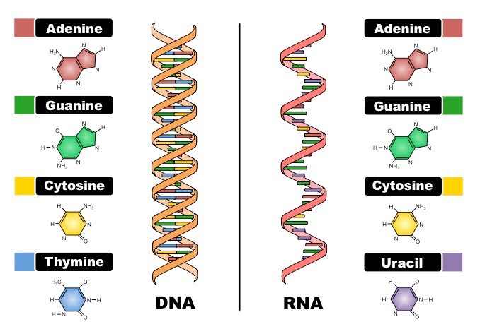 Штурм и натиск генной терапии старения - 4
