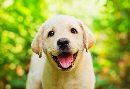 Любители щенков могут заразиться опасной болезнью