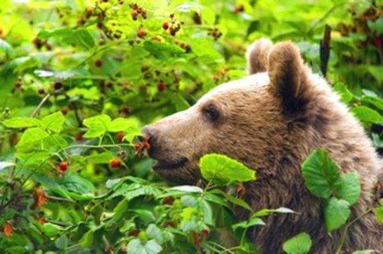 Кариес был даже у древних медведей