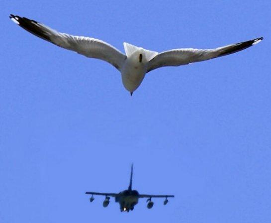 Французы выпустят самолет, похожий на птицу
