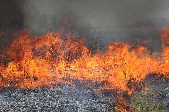 В древности Земле пришлось пережить глобальные пожары