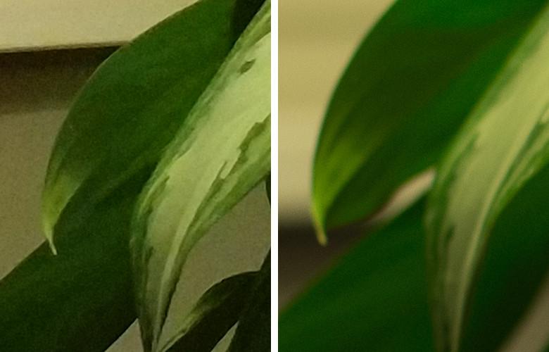 Честное сравнение камеры телефона и зеркального фотоаппарата - 7
